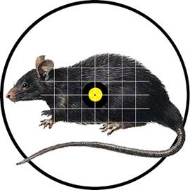Nowra Pest Control